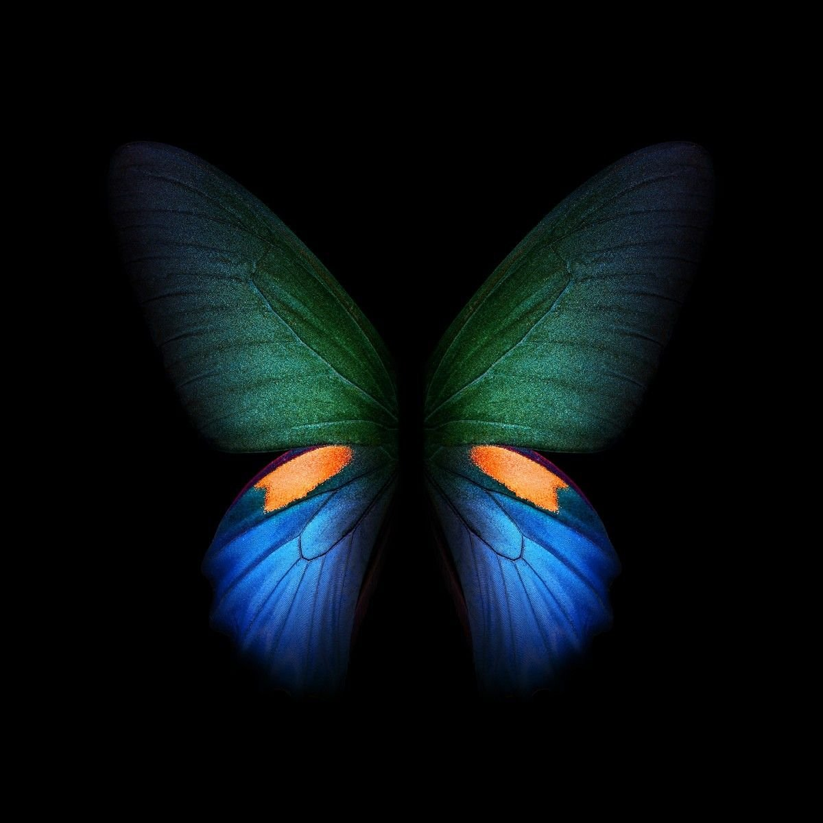 Download Samsung Galaxy Fold Official Wallpapers 7